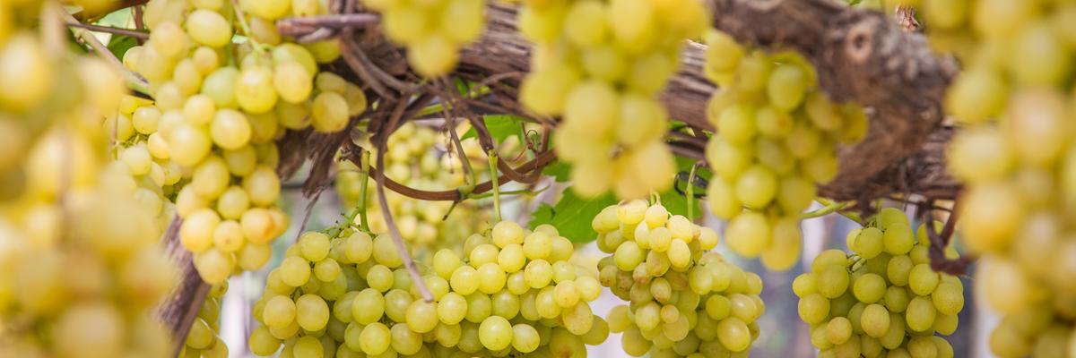 excellence-vtc-bordeaux-wine tours 1